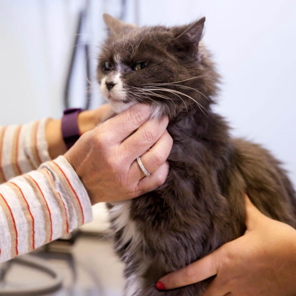Dr. Susan examining a cat
