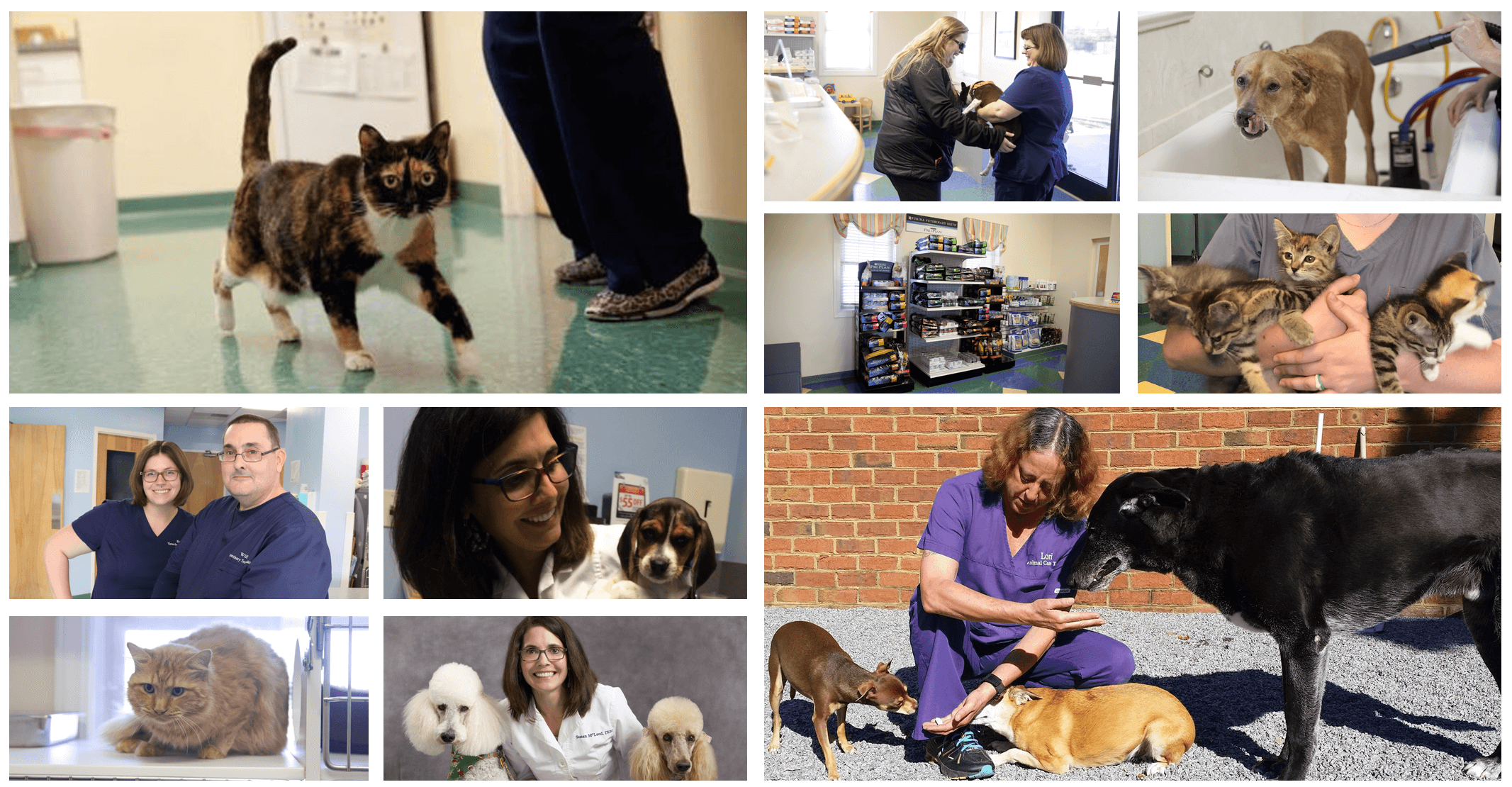 A collage of the various animals and pets Willow Grove Animal Clinic takes care of